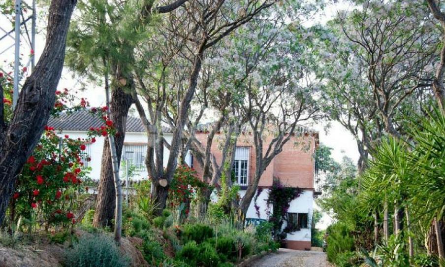 Vegetación singular en Cerros Bravo Apartamentos