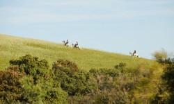 Paseo a caballo por la Finca