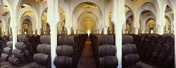 Interior 2 en Bodegas Fundador Pedro Domecq