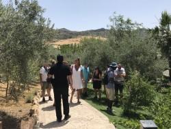 Actividades turísticas en el olivar