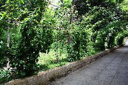 Jardín 3.jpg