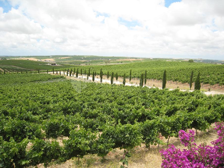 Bodegas Luis Pérez disfruta de las vistas de sus impecables viñedos