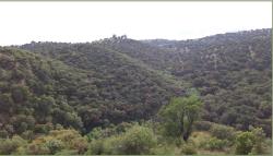 Terreno Finca2