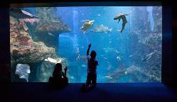 Aquarium San Sebastián en Gipuzkoa