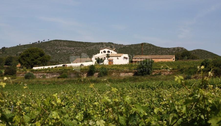 Entorno de viñedos en Mas Llagostera