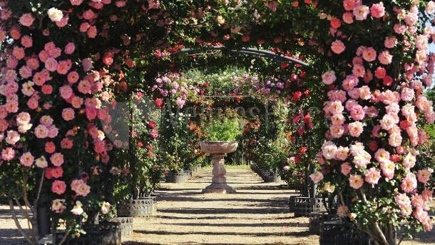 Exterior 10 en El Real Jardín Botánico